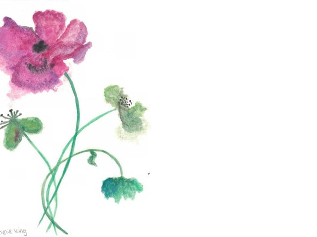 Poppies by Amelie King