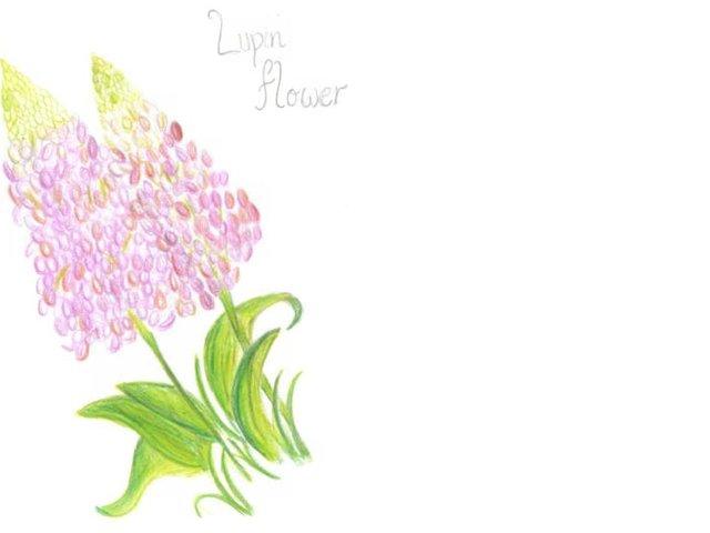 Lupin by Akanksha Bathula